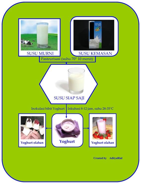 tahap sederhana pembuatan minuman yoghurt