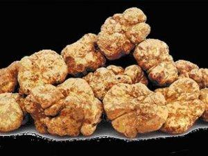 white truffle mushroom