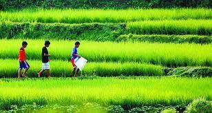 Bertani dan Awal Cerita Kehidupan Manusia