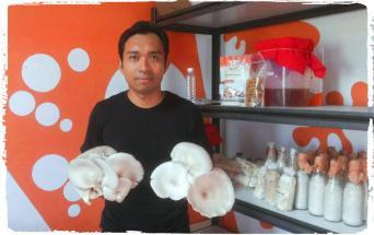 peluang-usaha-jual-bibit-jamur-dan-bubidaya-jamur-rumajamur-rial-aditya