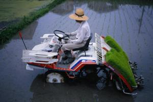 Modern farming practices for a Kyoto farmer planting rice seedlings