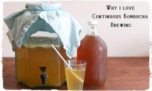 why-i-love-continuous-kombucha-the-nourishing-gourmet-kombucha-minuman-sehat-fermentasi-1001-khasiat