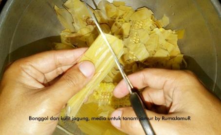 bonggol dan kulit jagung untuk media tanam jamur 2