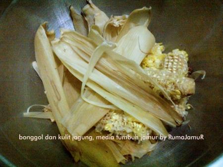 bonggol dan kulit jagung untuk media tanam jamur