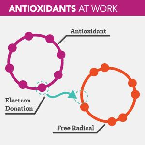 jamur sumber antioksidan