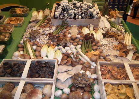 sentra jamur indonesia.rumajamur.bandung.cimahi.jawa barat
