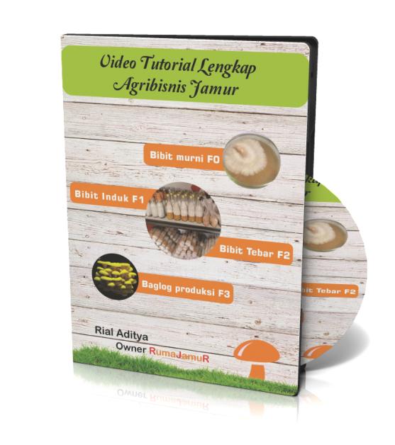 video tutorial pelatihan pembibitan dan budidaya jamur