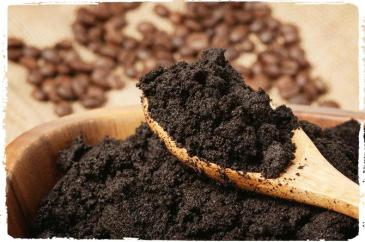ampas-kopi_manfaat-ampas-kopi_ampas-kopi-untuk-media-tanam-jamur