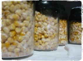 cara-membuat-bibit-induk-jamur-f1-menggunakan-media-biji-jagung-sorgum-milletberas_rumahjamur-ganesha-mycosoft