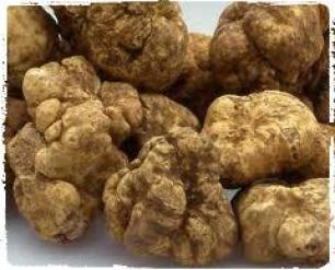 jamur-truffle-jamur-alam-paling-mahal