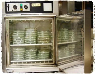 mesin-inkubator-untuk-inkubasi-bibit-jamur-murni-f0