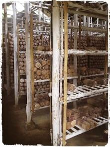 persiapan awal budidaya jamur. model rak jamur posisi baglog tidur. baglog jamur. budidaya jamur rumajamur