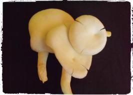 tubuh-buah-jamur-digunakan-untuk-membuat-kultur-jaringan-kultur-murni-f0
