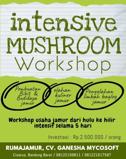 pelatihan jamur.mushroom workshop. peluang usaha jamur.bibit jamur.jamur kancing.jamur merang. jamur tiram. jamur shiitake. jamur kuping.jamur enokitake